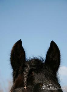 Ears and Braid