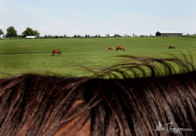 Horses in Distance