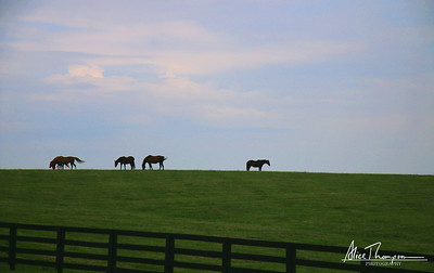 Midway Horse Farm - Midway, KY