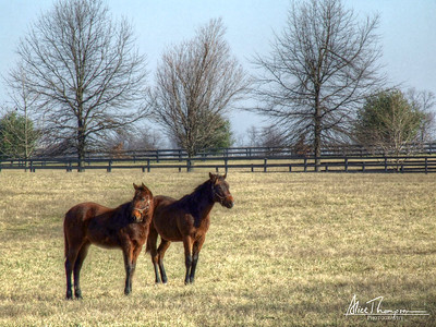 Two Horses (HDR) - Lexington