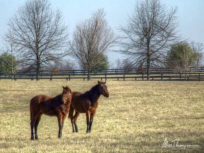 Two Horses (HDR) - Lexington