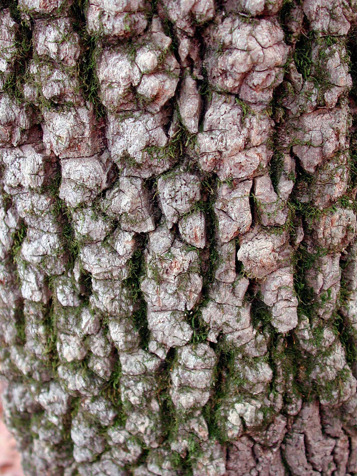 """""""As the poet said, 'Only God can make a tree', probably because it's so hard to figure out how to get the bark on."""" ~ Woody Allen"""
