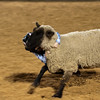 20120225-Katy_Rodeo_2-25-12_Sat-0284