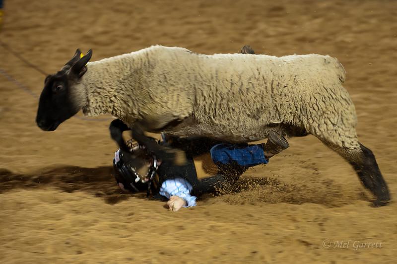 20120225-Katy_Rodeo_2-25-12_Sat-0277