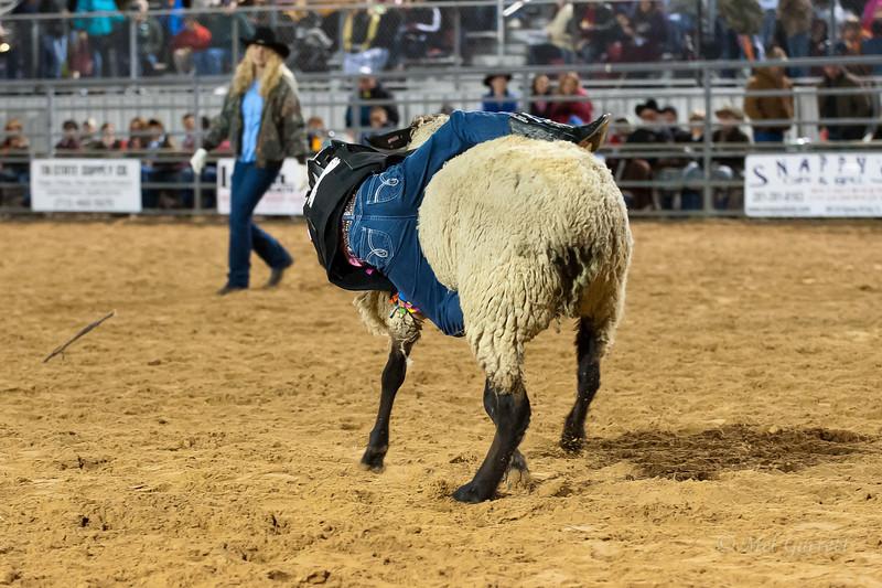 20120225-Katy_Rodeo_2-25-12_Sat-0249