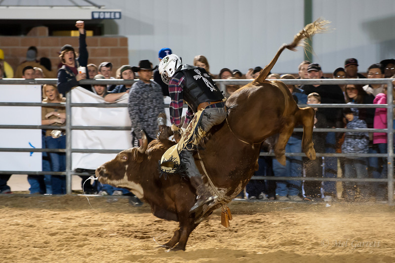 20120225-Katy_Rodeo_2-25-12_Sat-0444