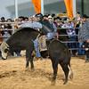 20120225-Katy_Rodeo_2-25-12_Sat-0426