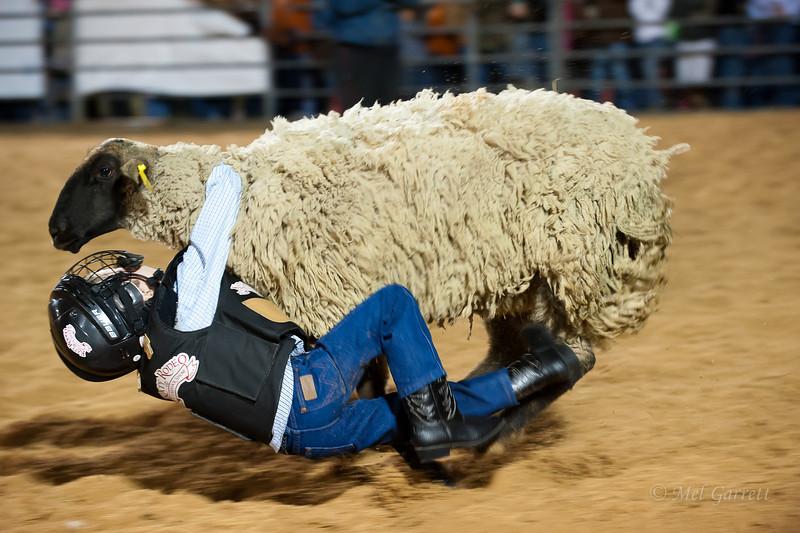 20120225-Katy_Rodeo_2-25-12_Sat-0377