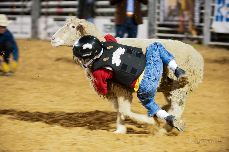 20120225-Katy_Rodeo_2-25-12_Sat-0404