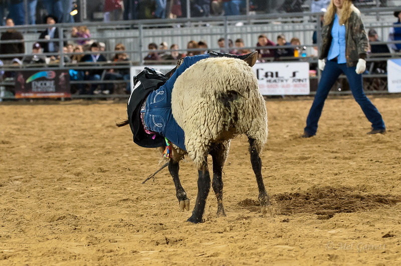 20120225-Katy_Rodeo_2-25-12_Sat-0250