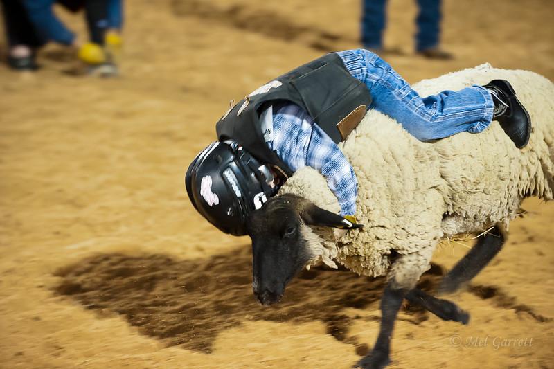 20120225-Katy_Rodeo_2-25-12_Sat-0406