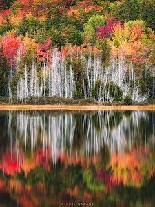 Autmnal glory of Acadia