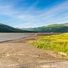 Grassy Tidal Flats