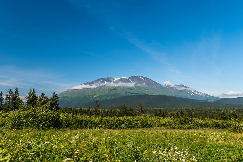 Wildflowers & Mountains