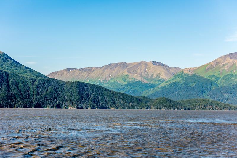 Kenai Mountain Forests