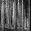 Woodbury Woods