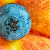 Blueberry on a Peach