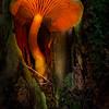 Mushroom Lantern