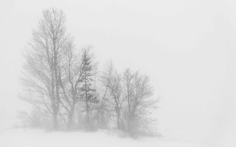 Snowy Copse
