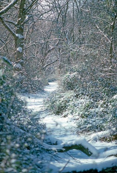 Schuylkill River Trail (2)