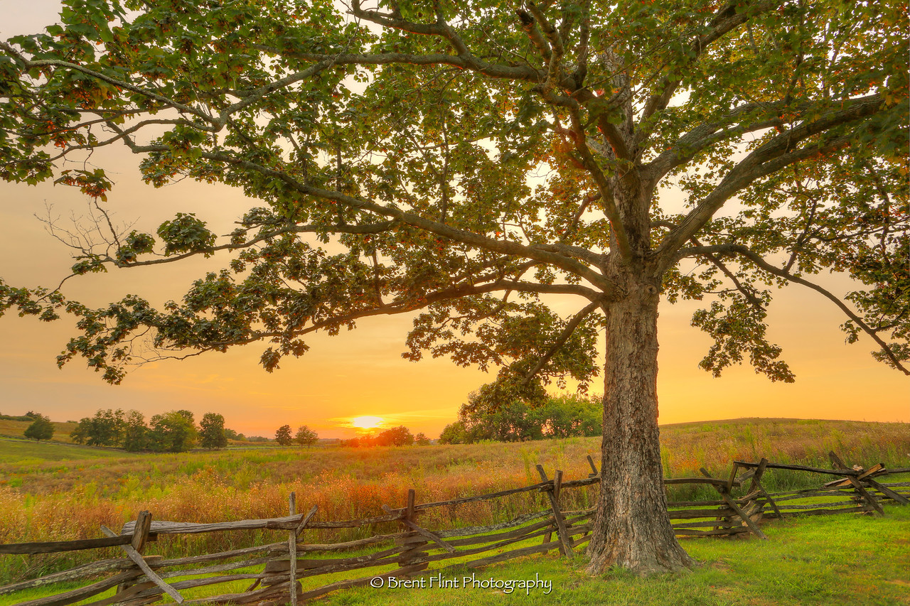 DF.4319 - maple tree and fence at sunset, Perryville Battlefield State Historic Site, KY.