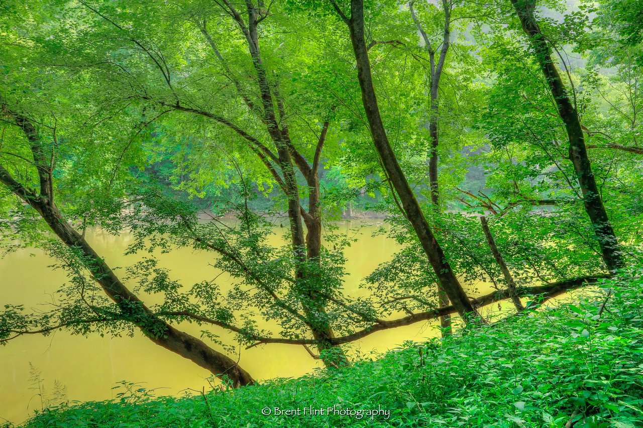 DF.4330 - bottomland forest on the shores of the Kentucky River, Tom Dorman State Nature Preserve, Garrard County, KY.