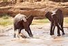 Elephants having Fun.