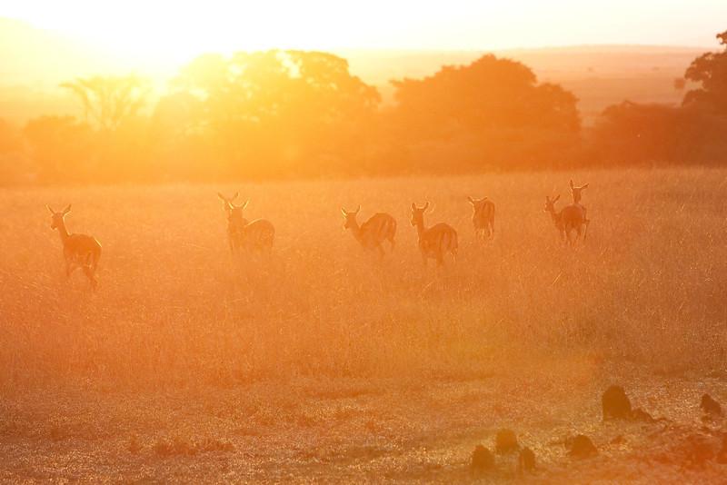 Deer in early morning light.
