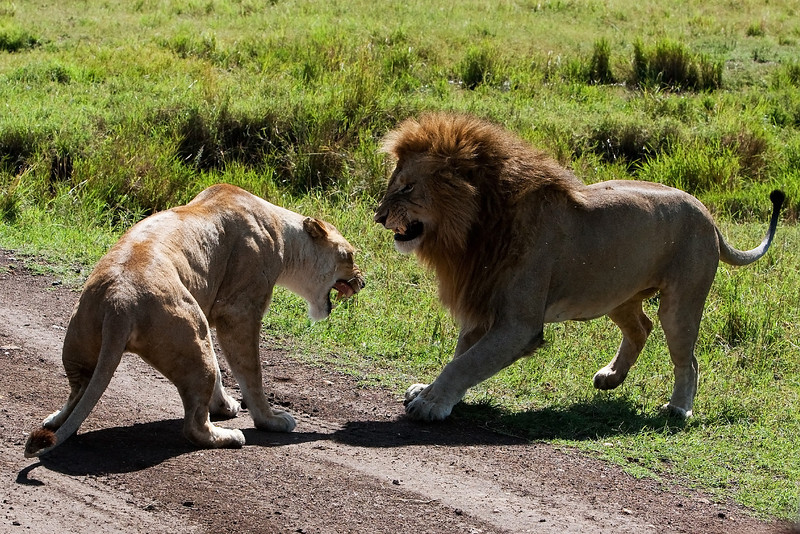 Lions. She did not like his advances.