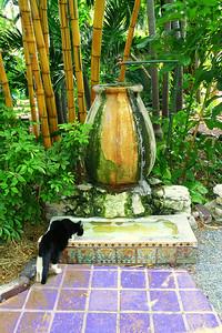 Heminway Cat