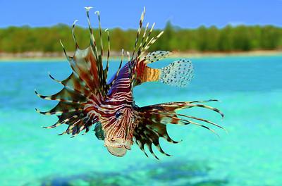 Reef Menace