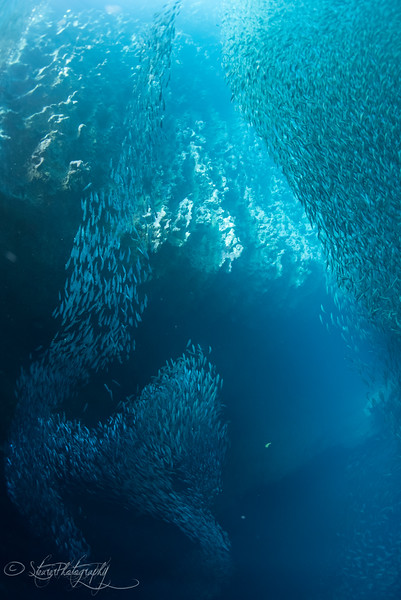 Swallows Cave VI - Vava'u, Kingdom of Tonga 2015