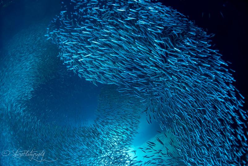 Swallows Cave IX - Vava'u, Kingdom of Tonga 2015