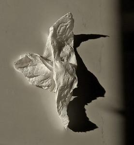 Crumpled Paper Towel & Shadow, Portland, 2019