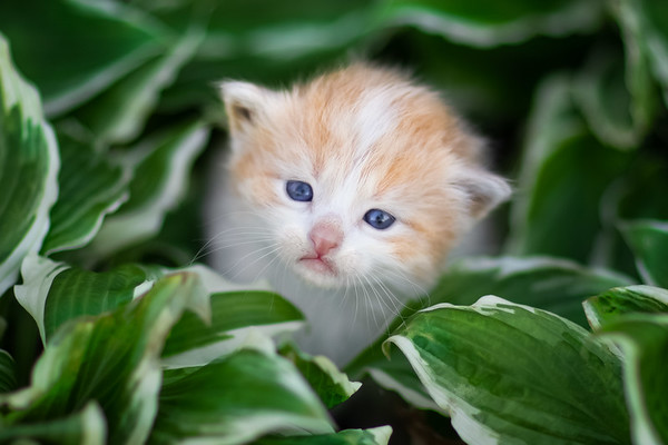 Kitten surrounds by green