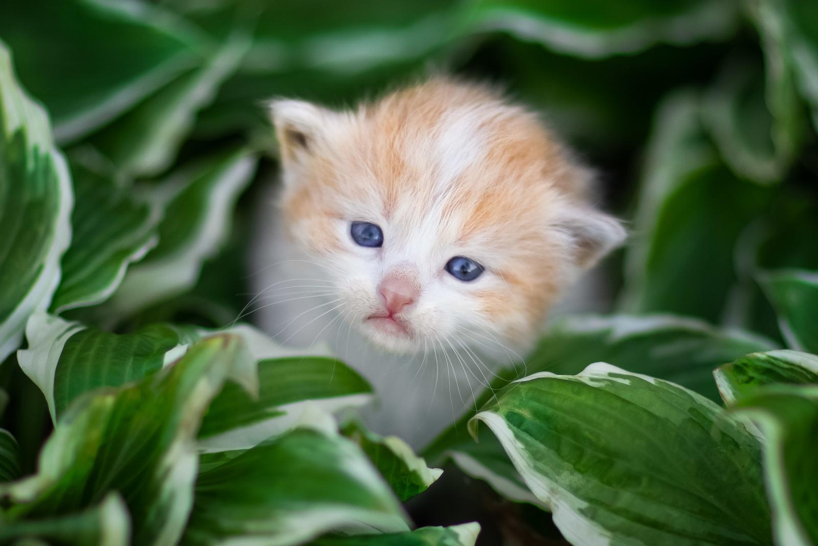 Kitten surrounds by green