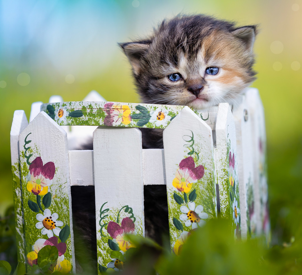 Kitten in basket