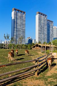 Songdo Central Park, Inchoeon, Korea (5)