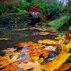 Kubota Garden Fallen Leaves