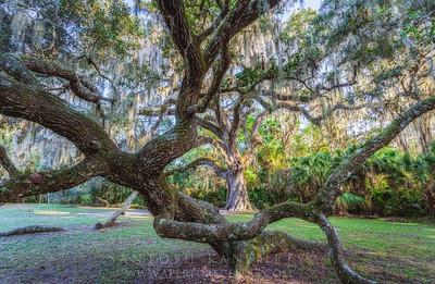 Fairchild Oak-Tree of life!