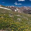 Spring In Rockies