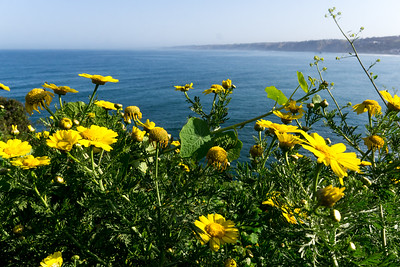 Spring Blooming in La Jolla