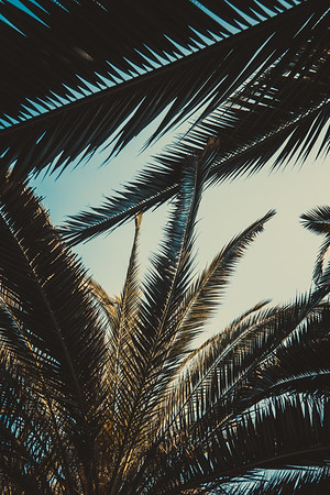 Palm Patterns