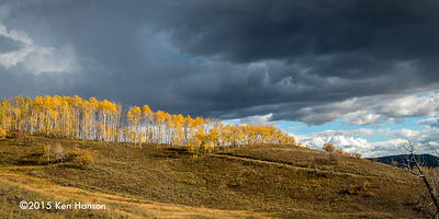 Aspens under dark clouds