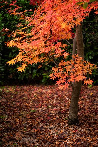 Mount Wilson Autumn