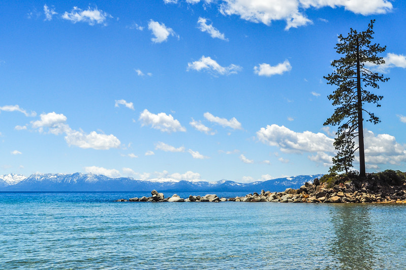 Lone Pine Tree & Lake Tahoe