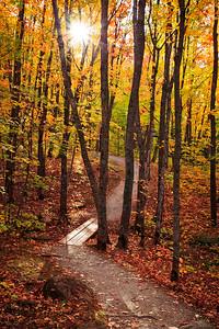 Autumn Meander - Oberg Mountain