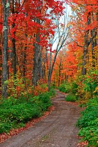 Scarlet Road