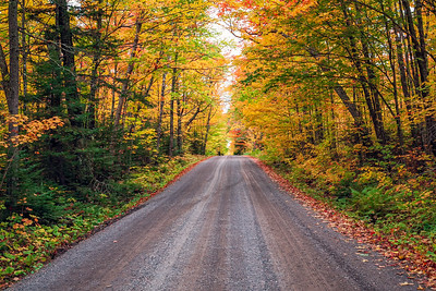 Fall Forest Road