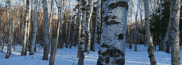 Split Rock Through Birch Woods